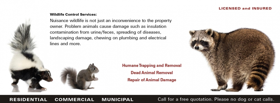 Humane Trapping and Removal Dead Animal Removal Repair of Animal Damage