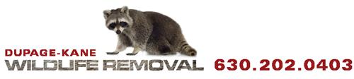 DuPage Kane Wildlife Removal